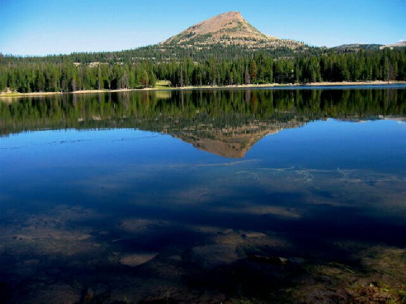 Utah state fish images for Utah fishing regulations
