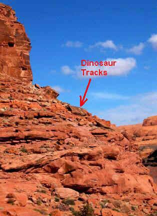Potash Petroglyphs and Dinosaur Tracks - Moab